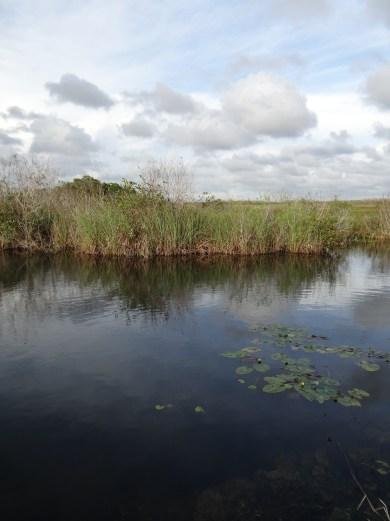 Everglades NP (34)