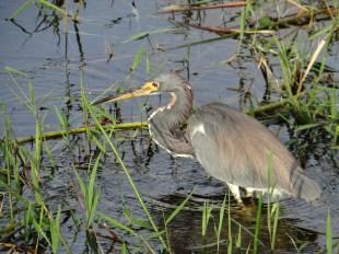 Everglades NP (35)