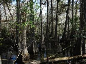 Everglades NP (4)