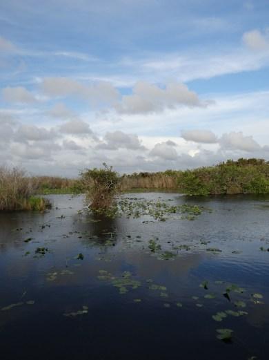 Everglades NP (42)
