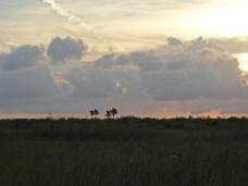 Everglades NP (44)