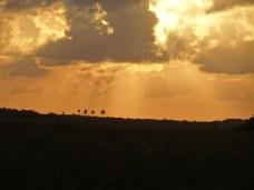 Everglades NP (45)