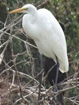 Everglades NP (9)