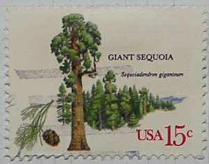1978 Giant Sequoia 15c