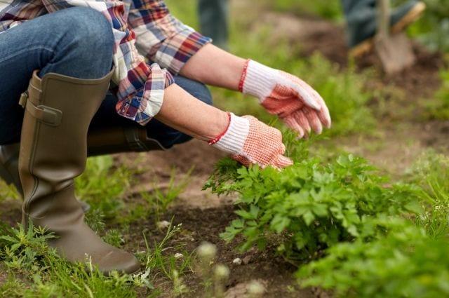 Тест: Насколько вы эрудированный садовод?