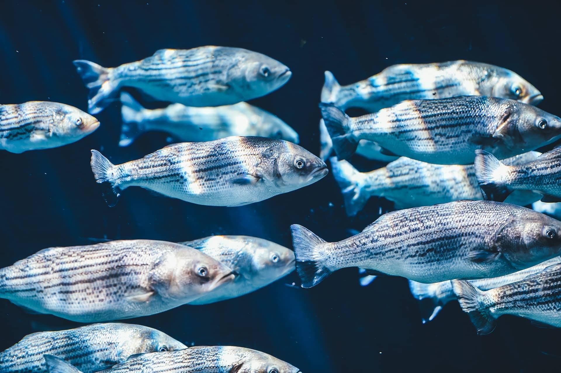 Тест на знания: Что вам известно о рыбах?