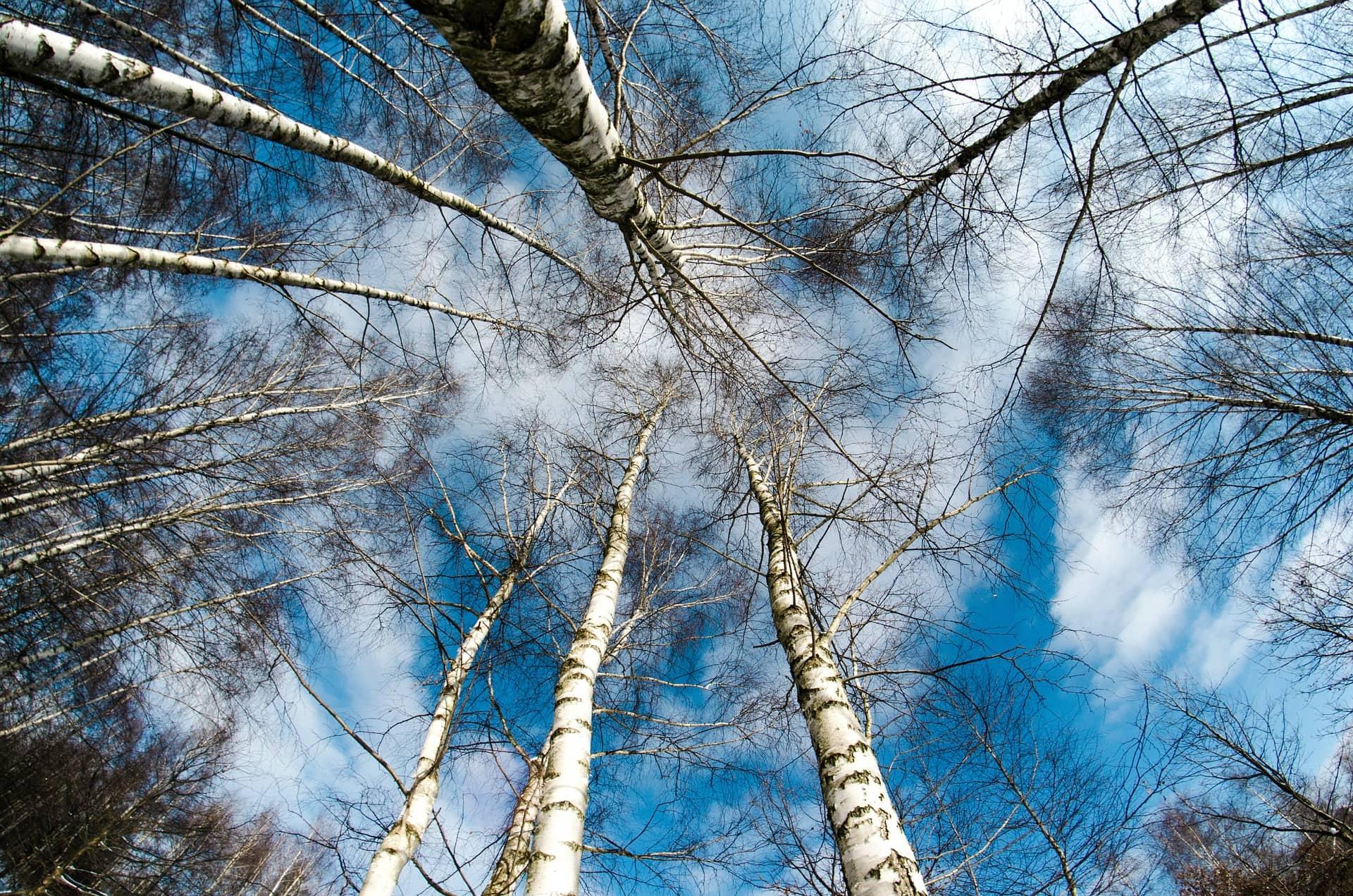 Тест: Каким деревом вы станете после смерти?