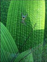 bright snare spider