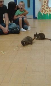 Meerkat's
