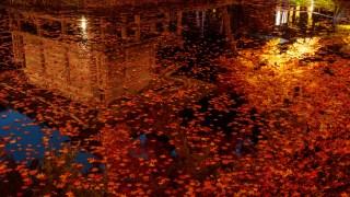 赤いもみじが池の水面を埋める金閣寺