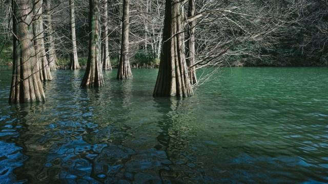 緑の湖面に生える木々