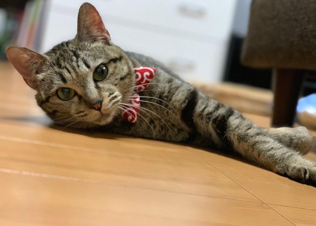 猫が横たわる
