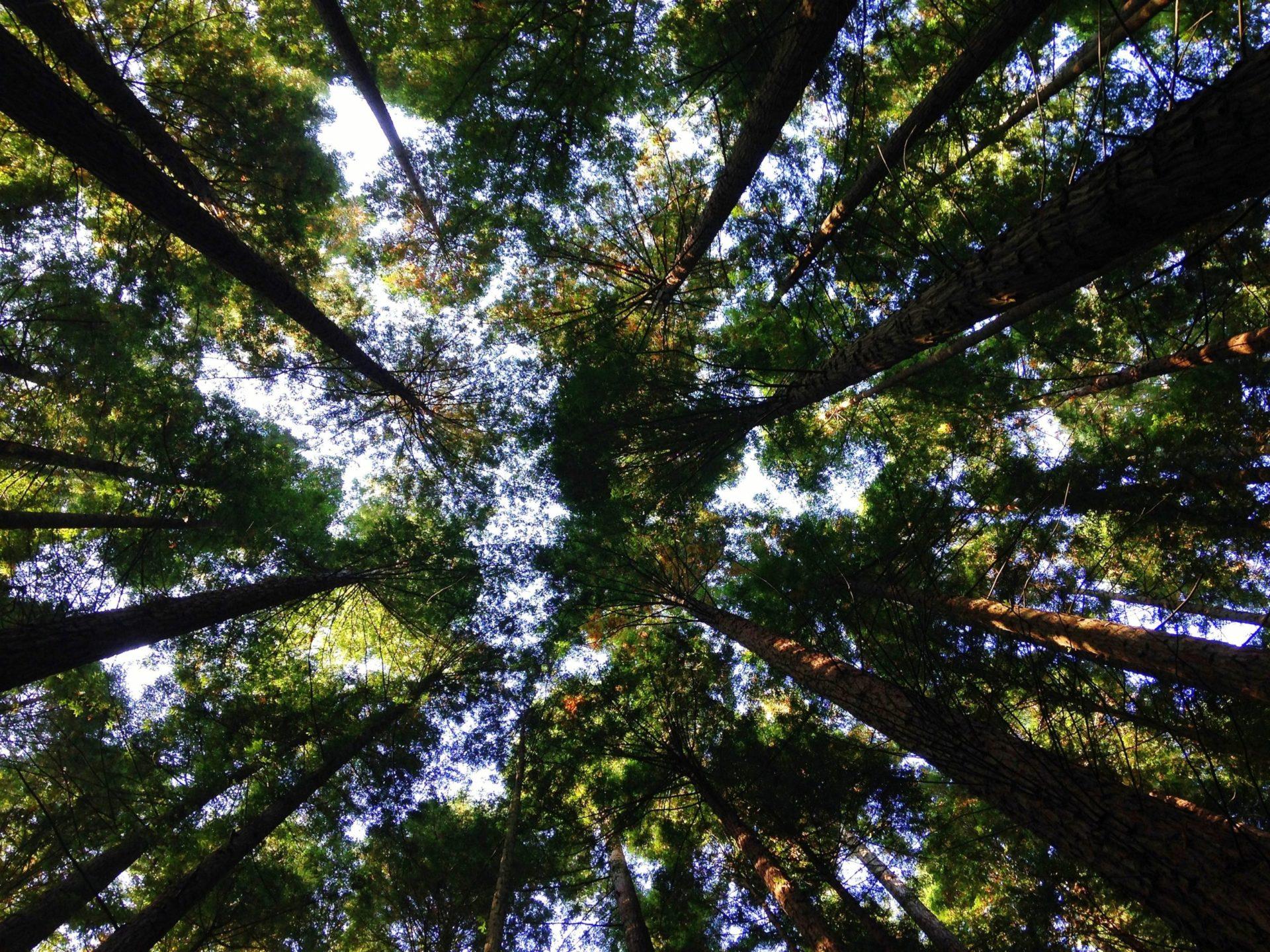 天気の良い森の中から空を見上げる