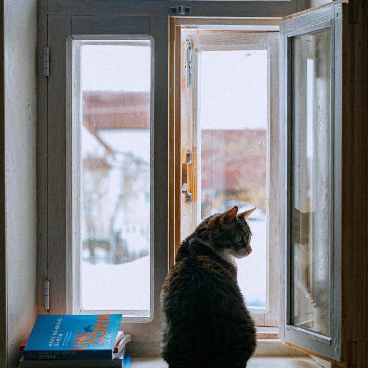 出窓の前にネコ