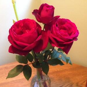 Rose Pruning Demo @ Garden Center in Sugarhouse Park | Salt Lake City | Utah | United States
