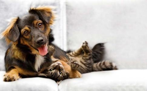 Puppy-And-Kitten-1024