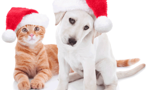 christmas-pets-dog-and-cat-61788759-1200