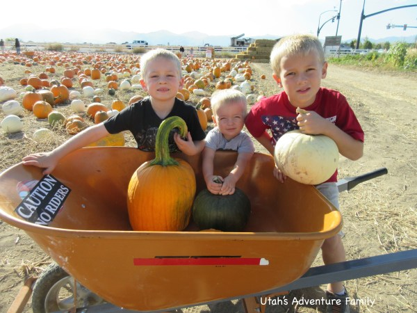 Each of the boys wanted a different kind of pumpkin...thank goodness for the wheelbarrow.
