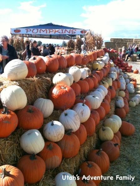 They had lots of pumpkin varieties.