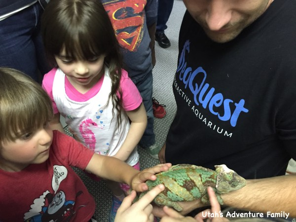 All the kids loved touching the chameleon!