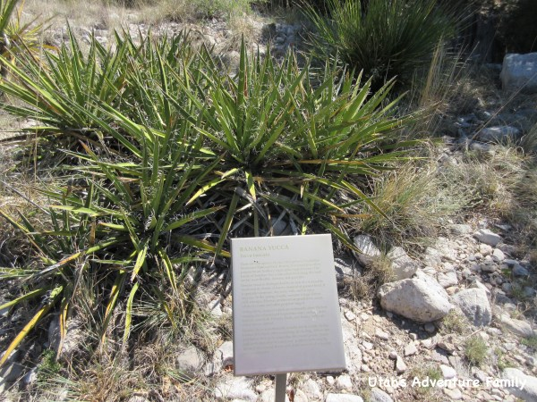 Guadalupe Mountains National Park 7