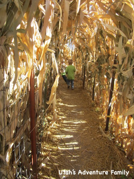 The preschoolers loved this corn stalk tunnel!