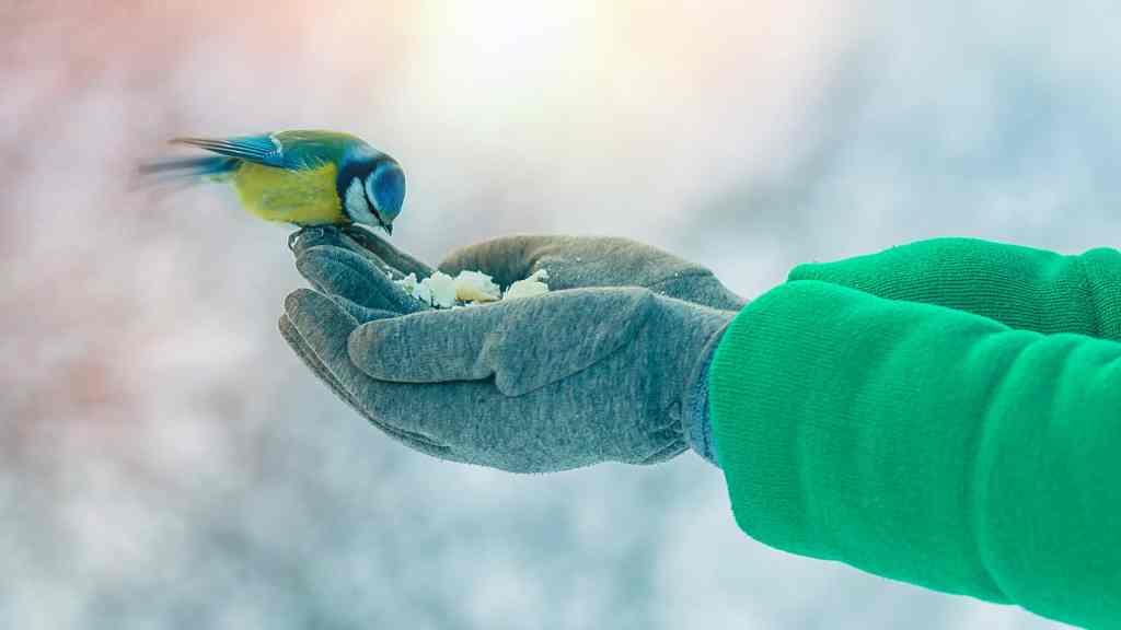 Händer som matar blåmes.
