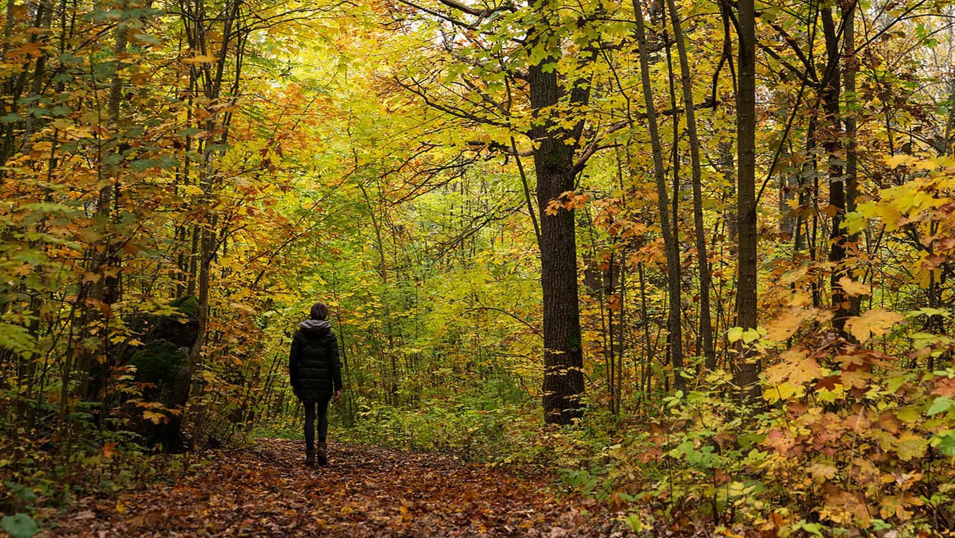 Lisen Sundgren guidar till kontakt med naturen