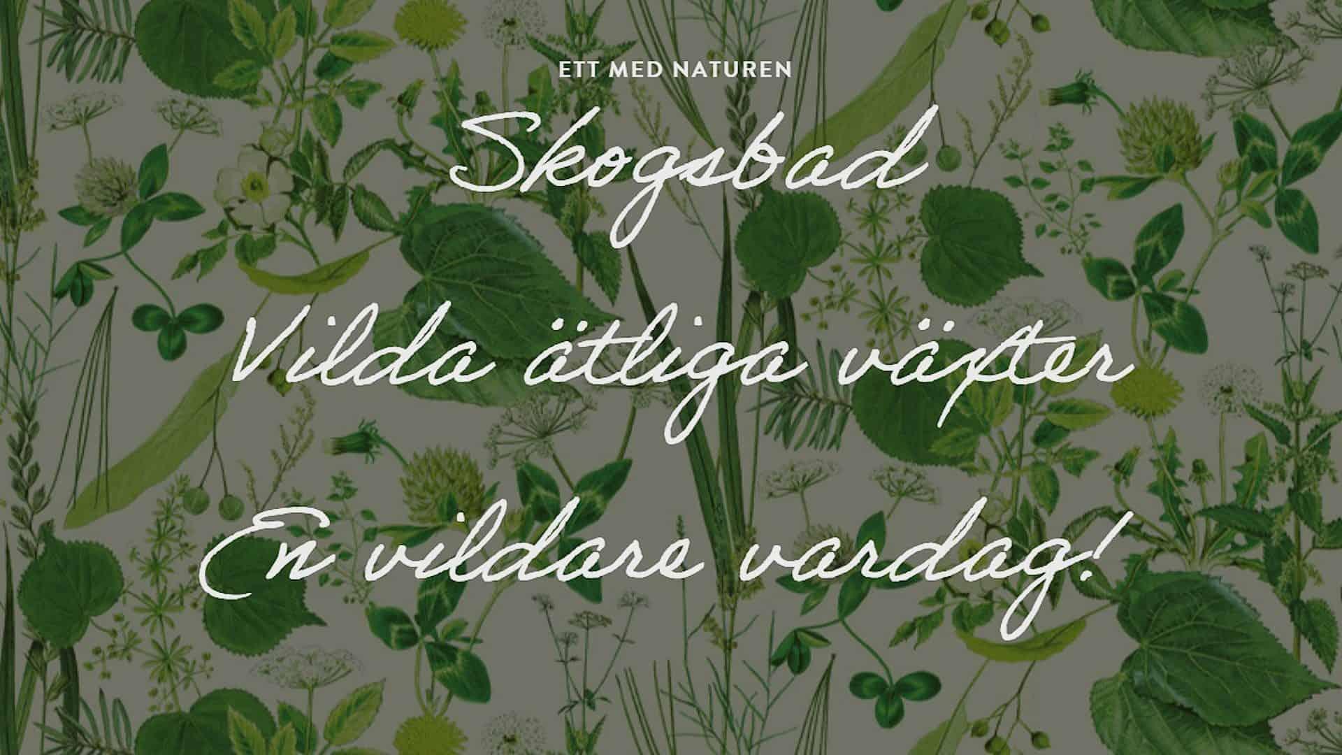 Vildare vardag. Uppmaning av Lisen Sundgren