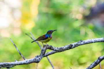 nature bird flying blue