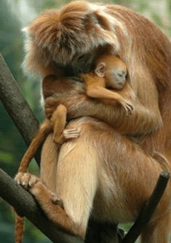 motherly love4