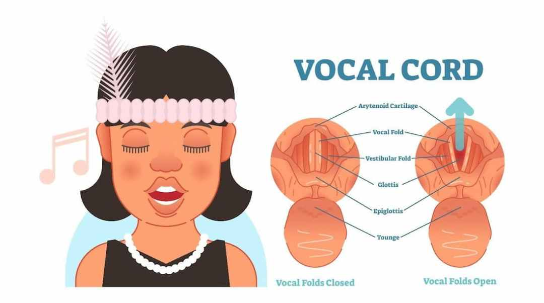 UTHSC ENT - Ask a Doctor - Vocal Cord Cancer Diagram