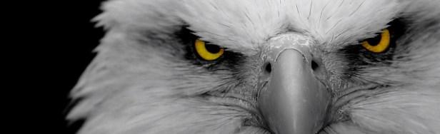Eagle eye Jon.jpg