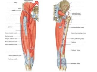 femoral-artery-6-638.jpg