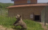 Bear cub saved