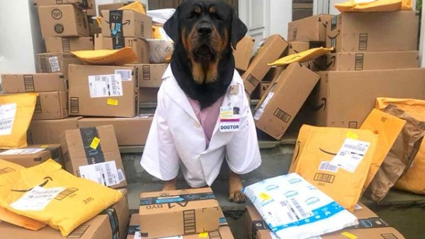 Loki-the-Dogtor-Packages-Loki-the-Therapy-Rottweiler-Facebook