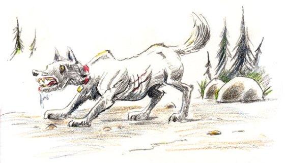 wild-dog