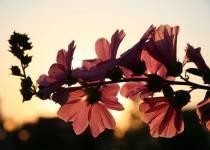 flori pentru suflet