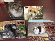 RRCC Greeting Cards