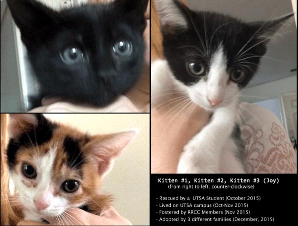 Kittens, 2015