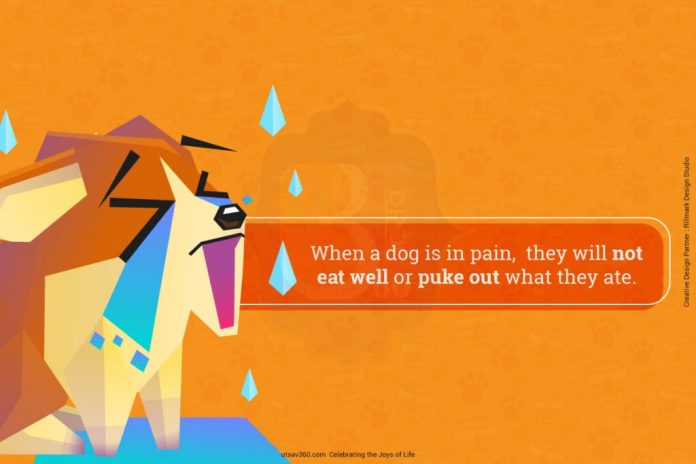 When a dog is in pain, they will not eat well or puke out what they ate.