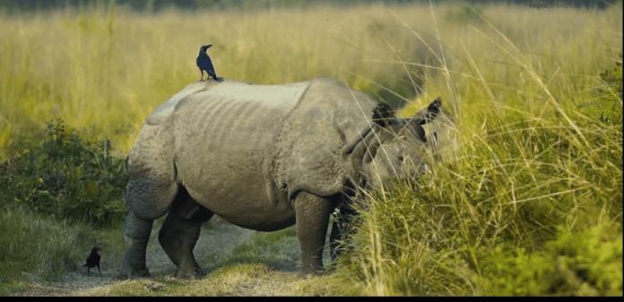One Horn Rhinoceros