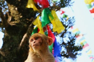 Monkey under a tree festooned with colorful ribbons.