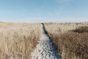 Sandy path through a dried up field