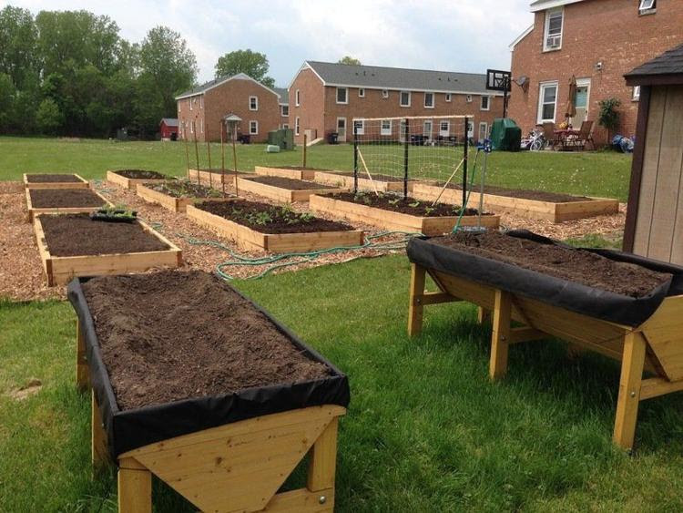 Picture of a community garden