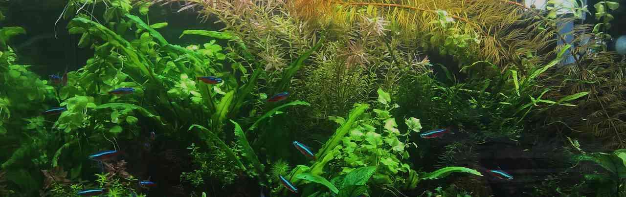Без калия растения не потребляют co2