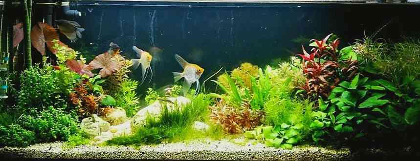 Редизайн растительного аквариума от Алексея Киргизова
