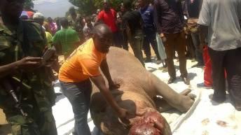 Uvira-RDC: Un hippopotame est tué par balle le matin de vendredi au quartier Kavimvira