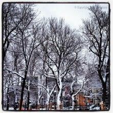 White canvas: Sugar-coated trees