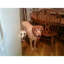 Lucy -- April 2000 - December 2011 (3/3)
